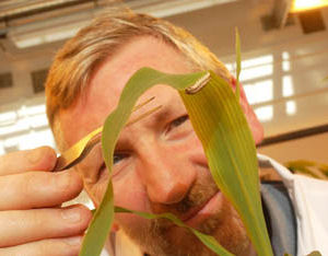 Lancaster University Scientist Dr Kenneth Wilson investigating the African Armyworm virus