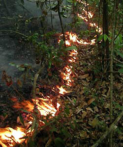 Understorey fire burns a forest reserve in the Brazilian Amazon