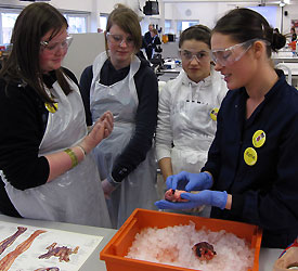Pupils from Dallam School learn about the inner workings of the heart in a Biological Sciences workshop