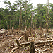 Short films on slash and burn practices in the Amazon Rainforest
