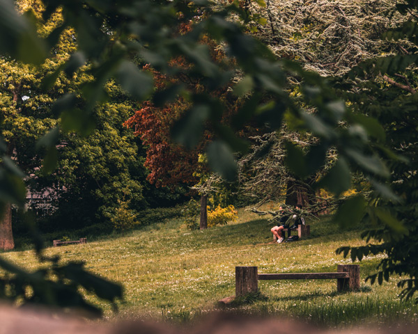 Green space and trees with a wooden bench