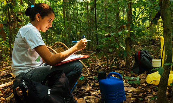A researcher takes readings in the Amazon rainforest