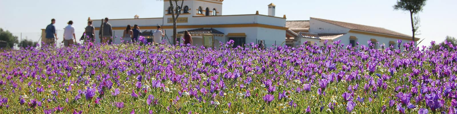A Spanish villa surrounded by purple flowers