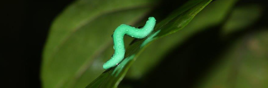 Imitation caterpillar