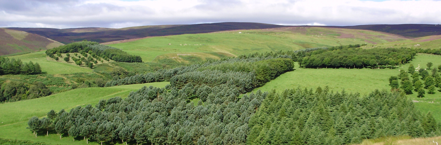 Glensaugh forest
