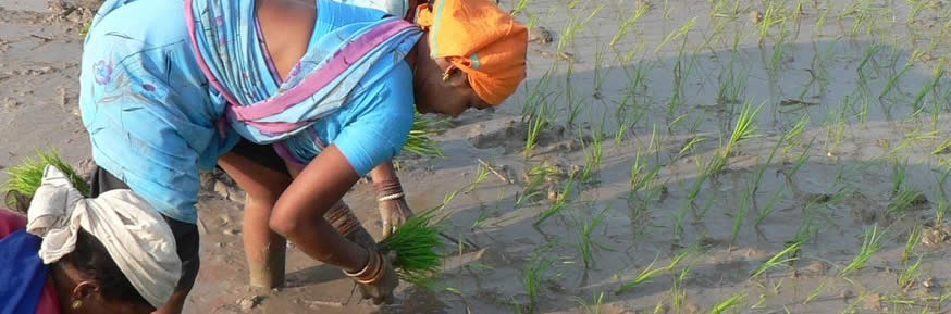 Woman in paddy field - image courtesy of rajkumar1220 on Flickr