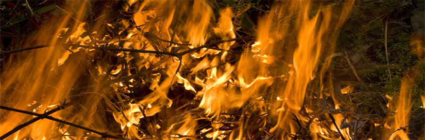 Documentary on fire in tropical forests