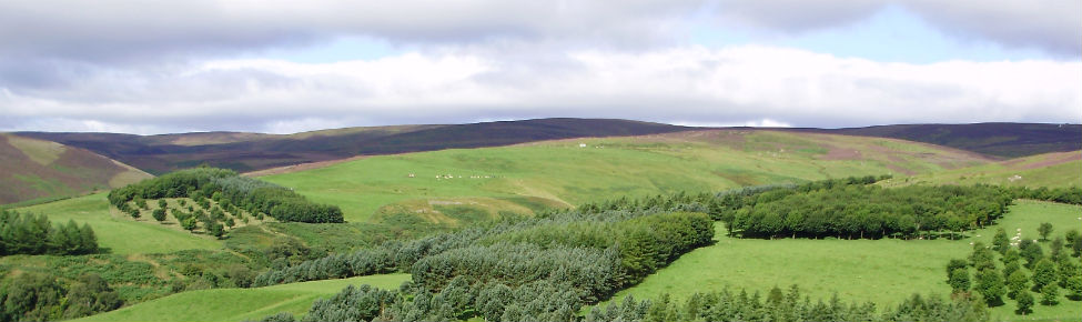 experimental agroforestry site in Scotland
