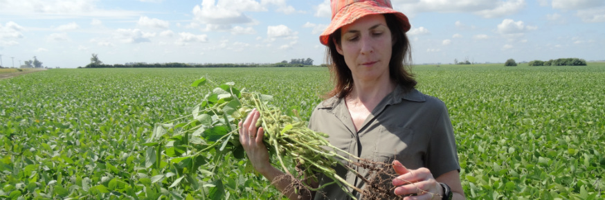 Professor Mariana Rufino studying soya on a farm in Argentina